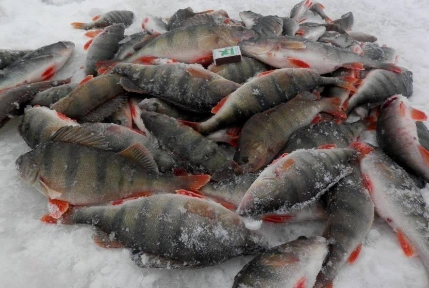 Рекорды на зимней рыбалке. топ-10 самых крупных трофеев