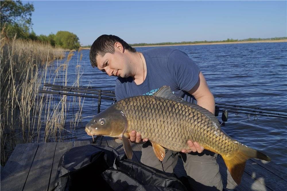 Рыбалка в ивановской области: популярные реки и озёра региона, виды рыб в водоёмах, платные места для ловли