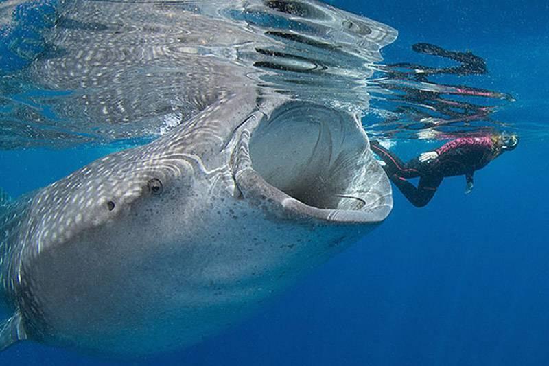 Самые большие животные в истории и ныне живущие
