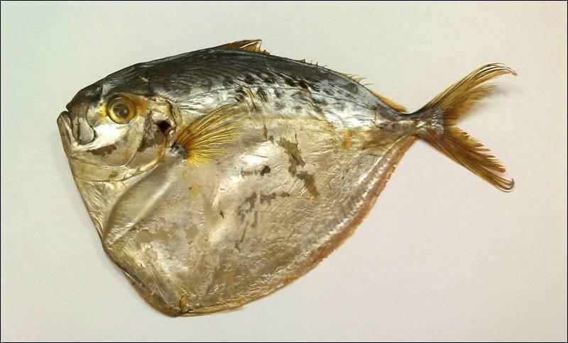Как выглядит, чем питается и где обитает рыба ёрш