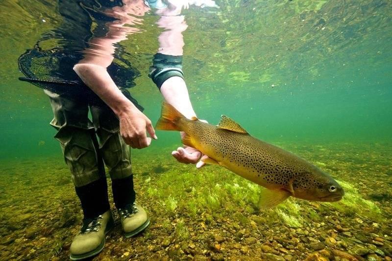 Рыбалка в норвегии (26 фото): морская с берега и другая. какую рыбу ловят в тромсе? снасти на треску, краба и лосося