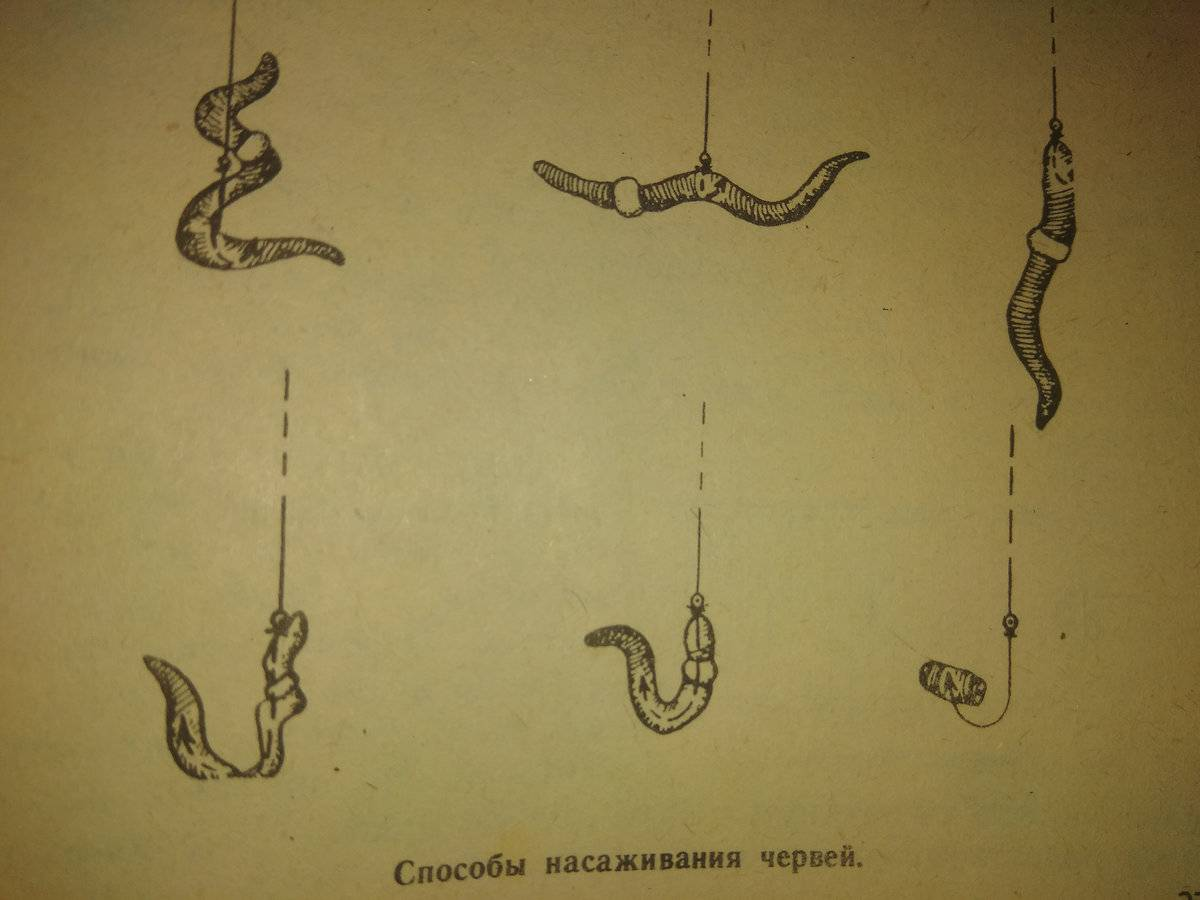 Черви для рыбалки. какие черви лучше подходят для рыбалки?