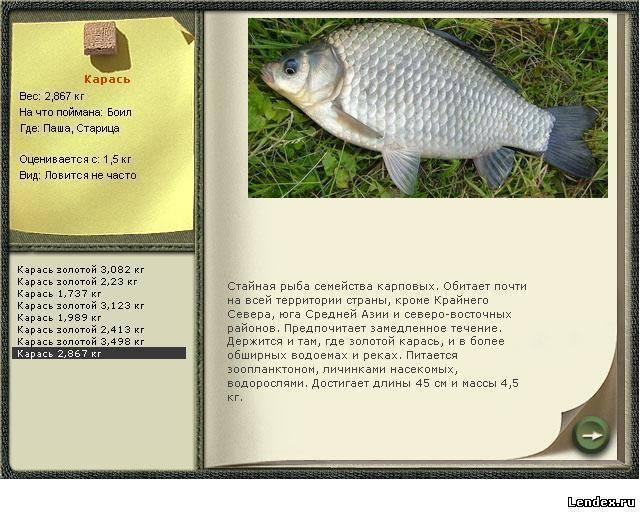 Карась (рыба). фото и описание. видео | все о карасе