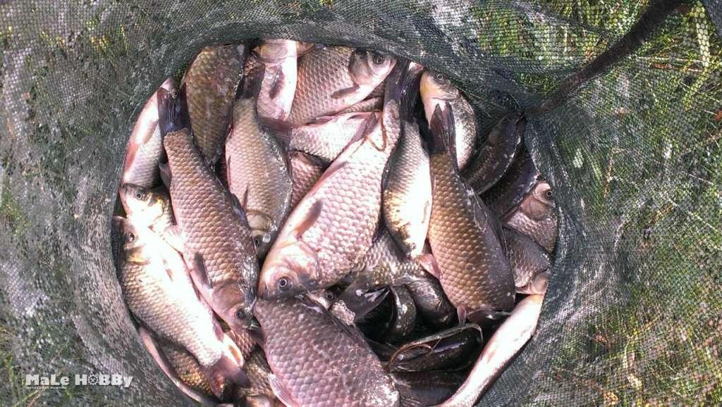 Платная, бесплатная рыбалка в ногинском районе: рыбалка в воскресенском, боровково