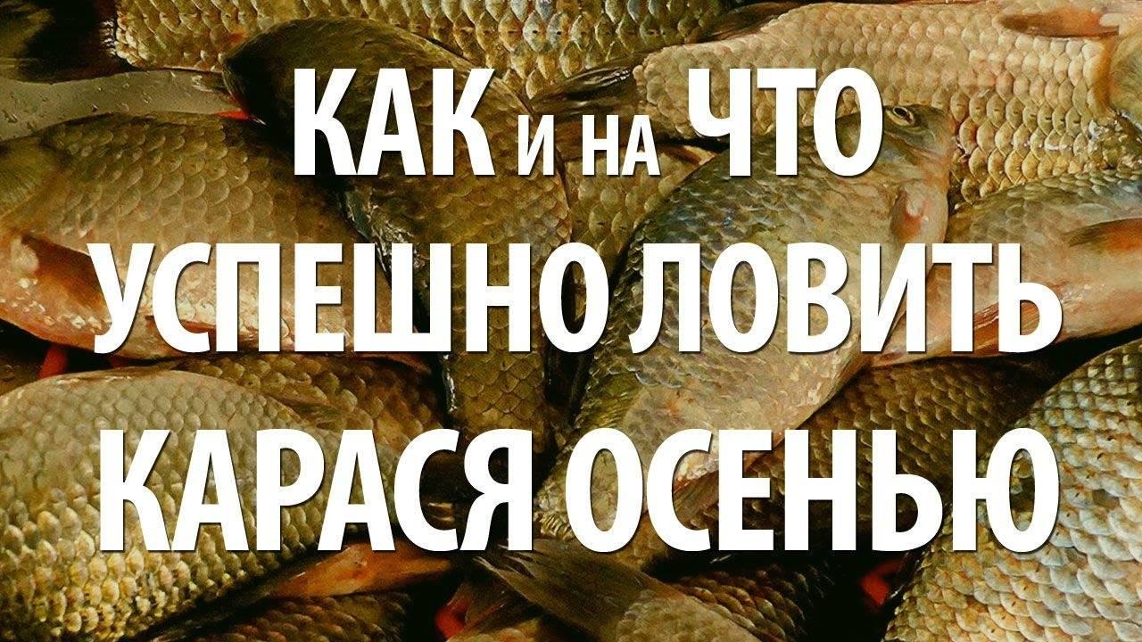 Ловля карася осенью - читайте на сatcher.fish