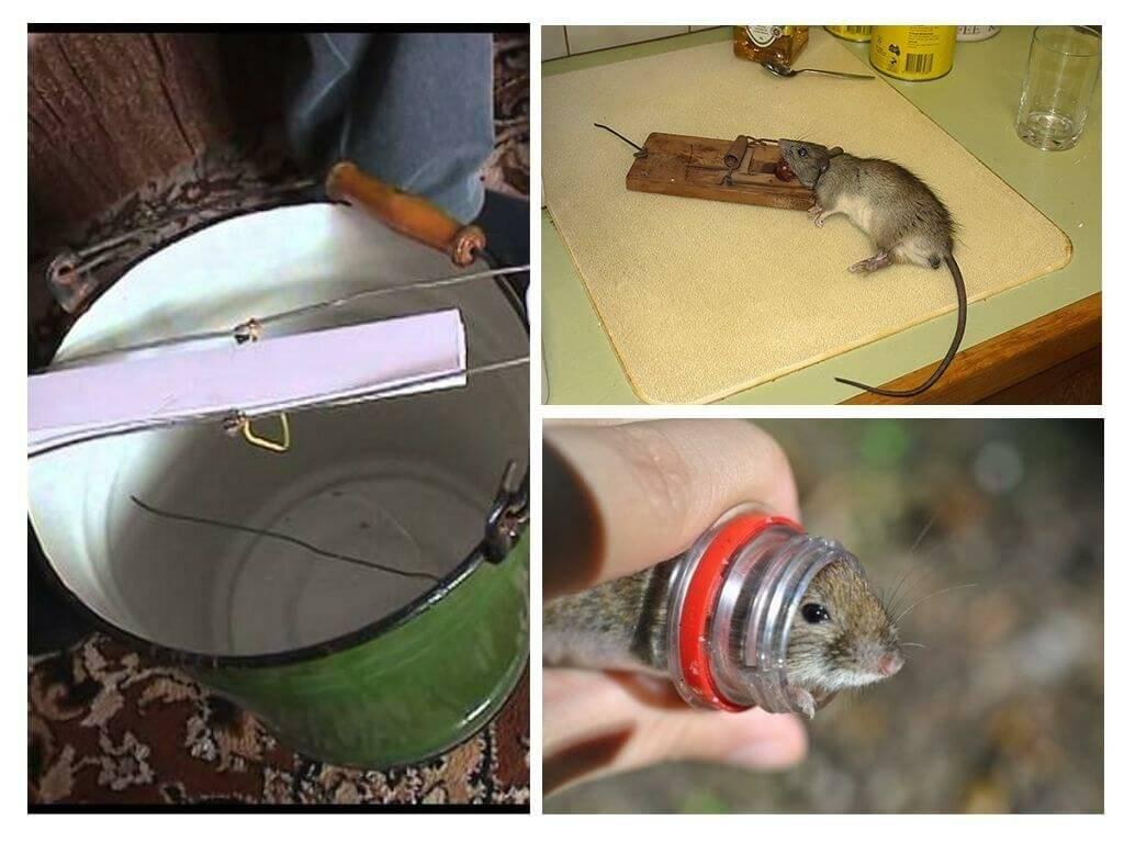 6 эффективных средств от мышей: химические, механические, народные методы