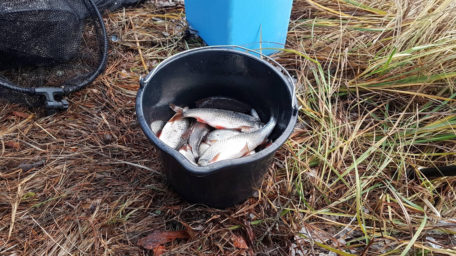 Ловля плотвы осенью на поплавочную удочку и на фидер