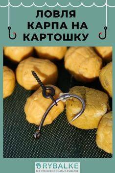 Секреты ловли карпа на картофельные насадки