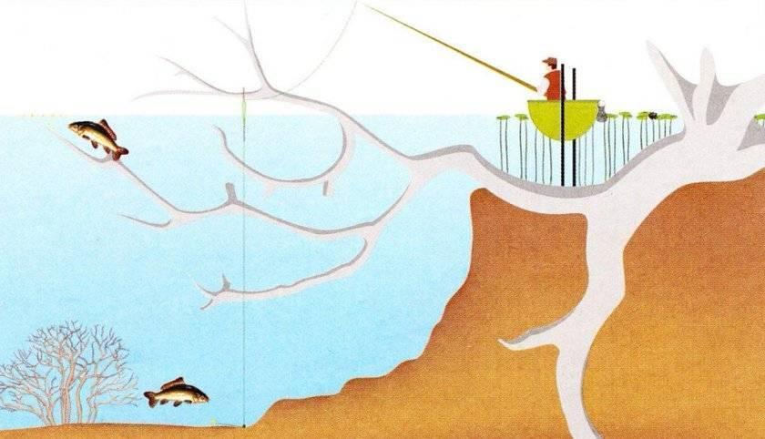 Водоем как среда обитания рыб