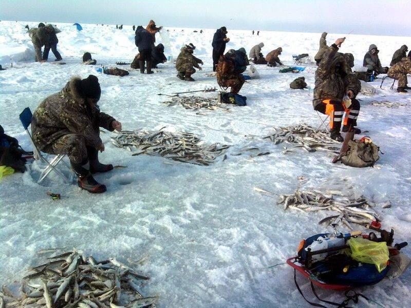 ᐉ бердь - место для рыбака - ✅ ribalka-snasti.ru