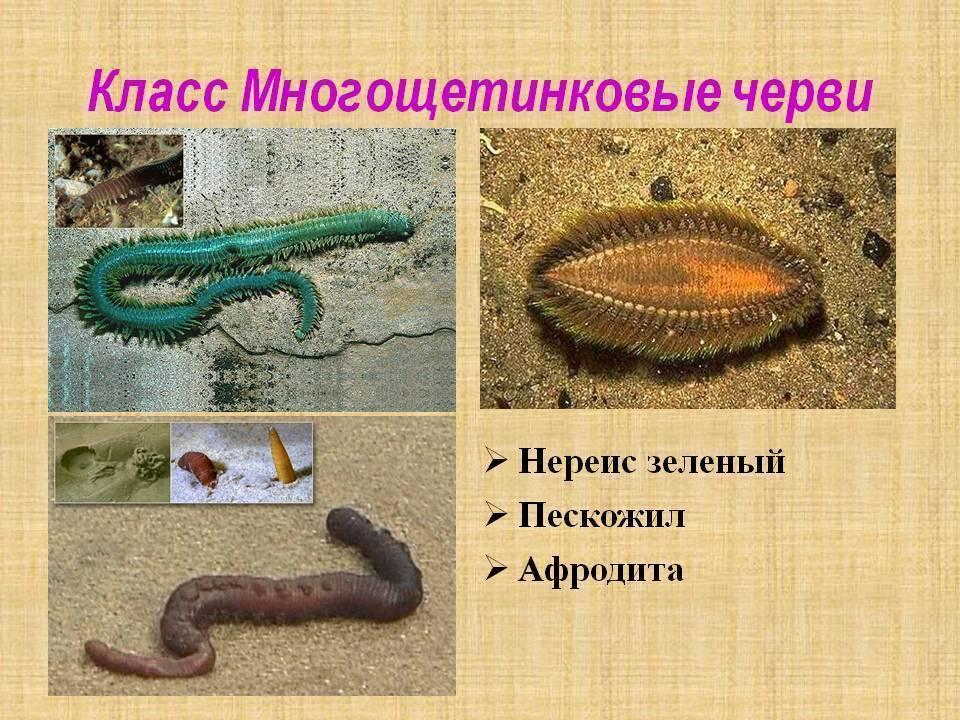 Ядовитые обитатели морских глубин - фото, описание, классификация