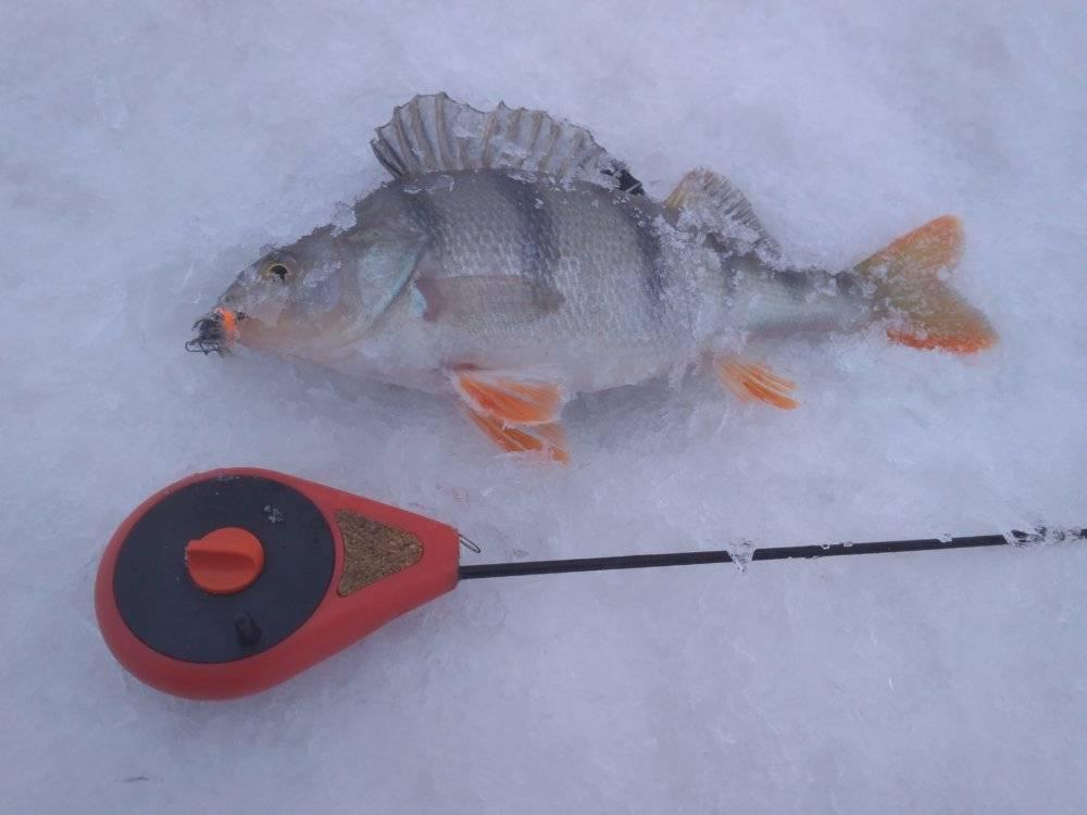 Как ловить окуня на джиг - читайте на сatcher.fish