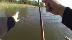 Ловля белого амура на пружину – рыбалка онлайн ? prorybu.ru