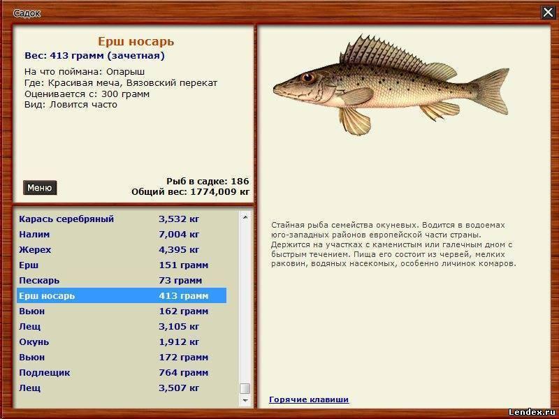 Рыбалка в норвегии — виды ловли, лицензии, особенности, отзывы