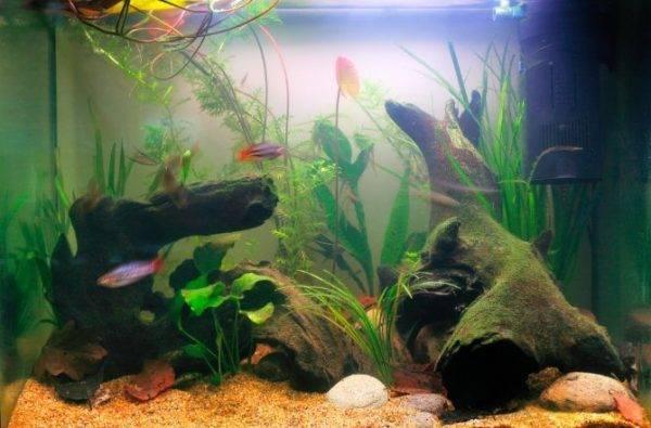 Мутная вода в аквариуме, что делать? содержание аквариума