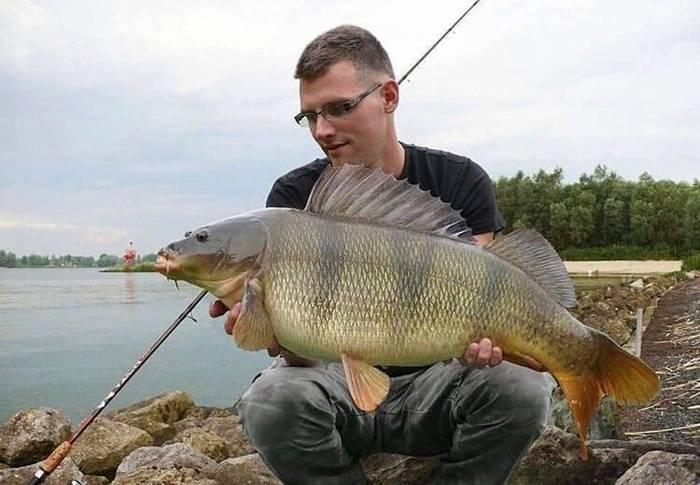 Рыбалка в беларуси: в белоозерске и борисове, в быхове на днепре и на озерах, другие места, ловля налима и сома