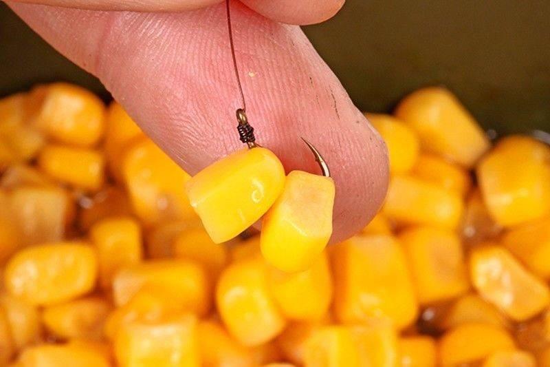 Ловля карпа на кукурузу - рекомендации начинающим