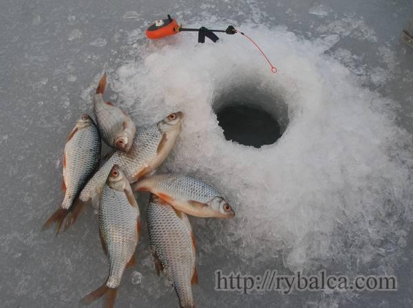 Рыбалка на плотву зимой. снасти, насадки, время ловли • мега рыбак