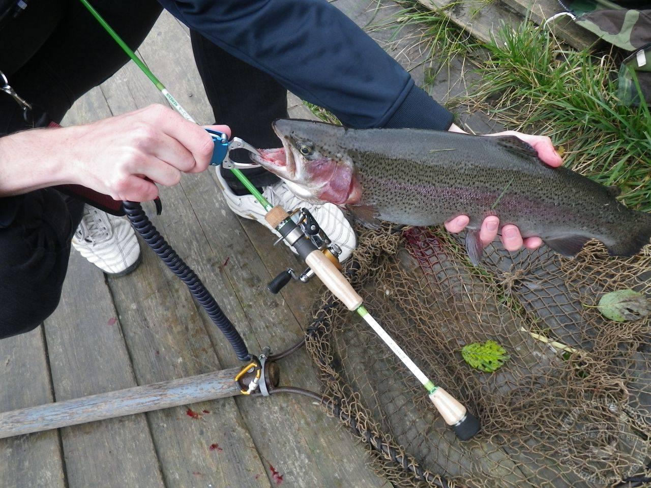 Рыбалка в орловской области: какая рыба водится в водоемах, список бесплатных и платных мест, реки и озера | berlogakarelia.ru