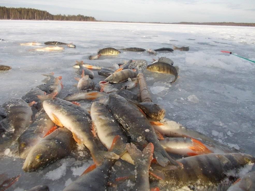 Особенности зимней рыбалки. в ханты-мансийске рыбаки добыли газ из реки