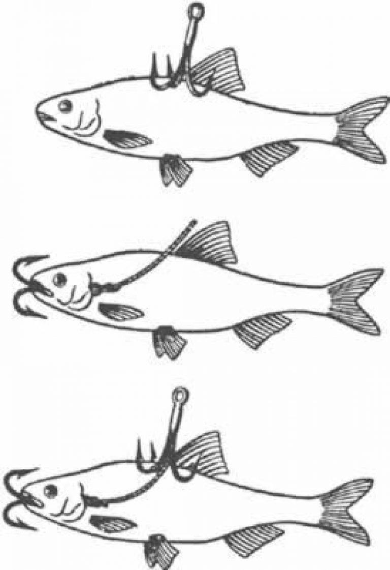 Как ловить щуку на живца - используемые приманки, снасти и оснастка, техника и особенности ловли