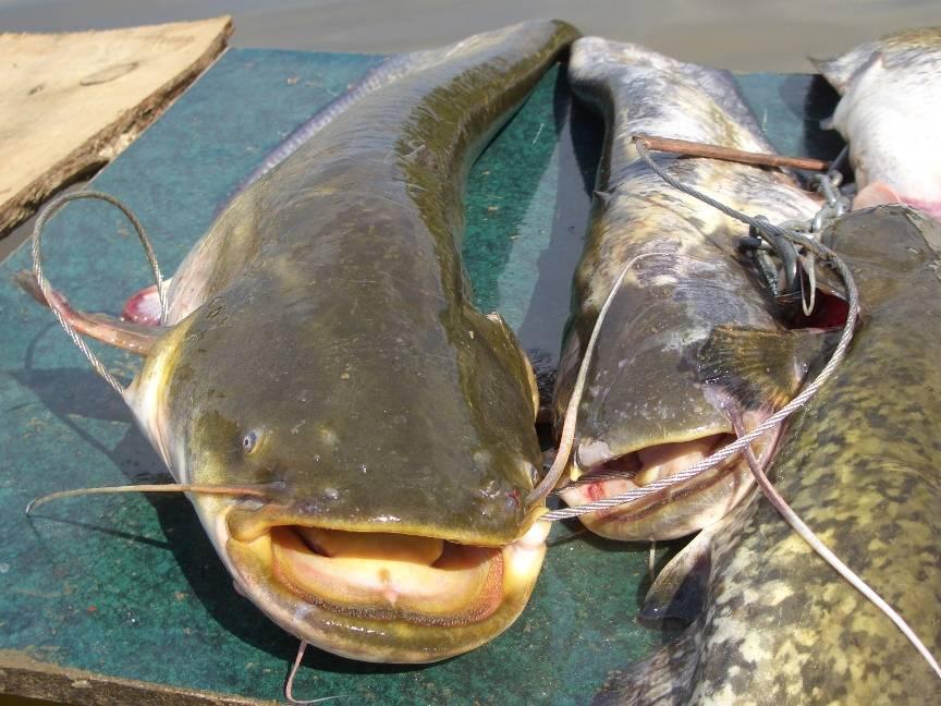 Рыболовные базы на волге - в дельте и на нижней волге - отзывы и цены