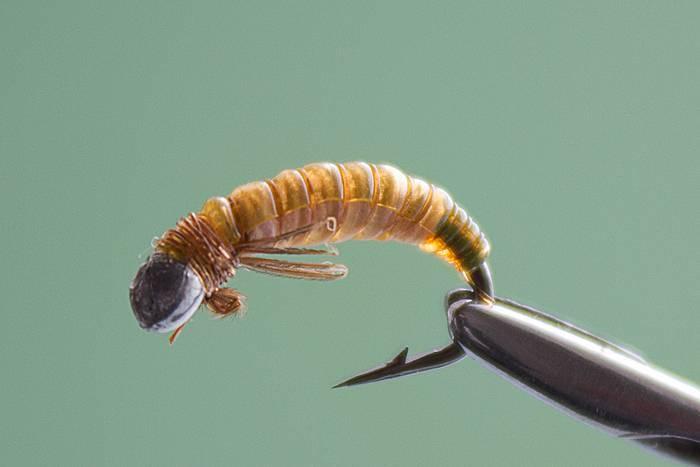 Поденки, их личинки, особенности строения, жизни и фото. поденка обыкновенная – рожденная для прекрасного полета длиной в ночь шпонка насекомое