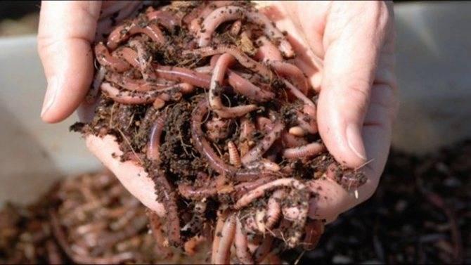 Как успешно и правильно ловить рыбу с живыми червями: 20-летний опыт