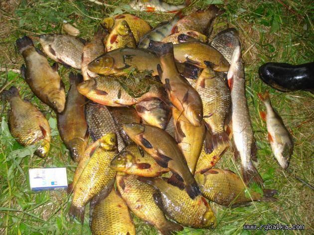 Карта рыболовных мест республики чувашия. описание и фото | отзывы
