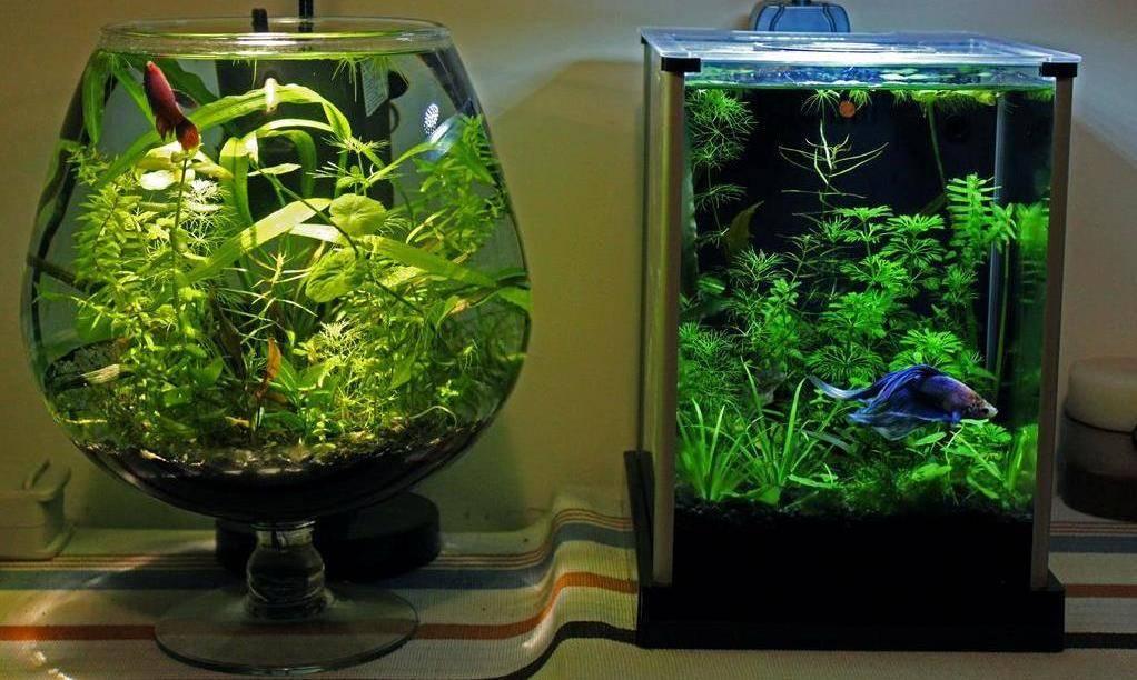 16 лучших аквариумных рыбок