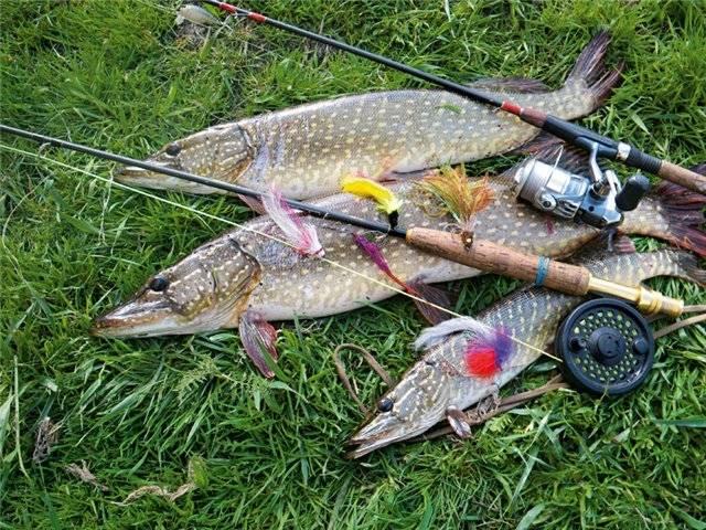 Рыбалка в подмосковье – популярные бесплатные места