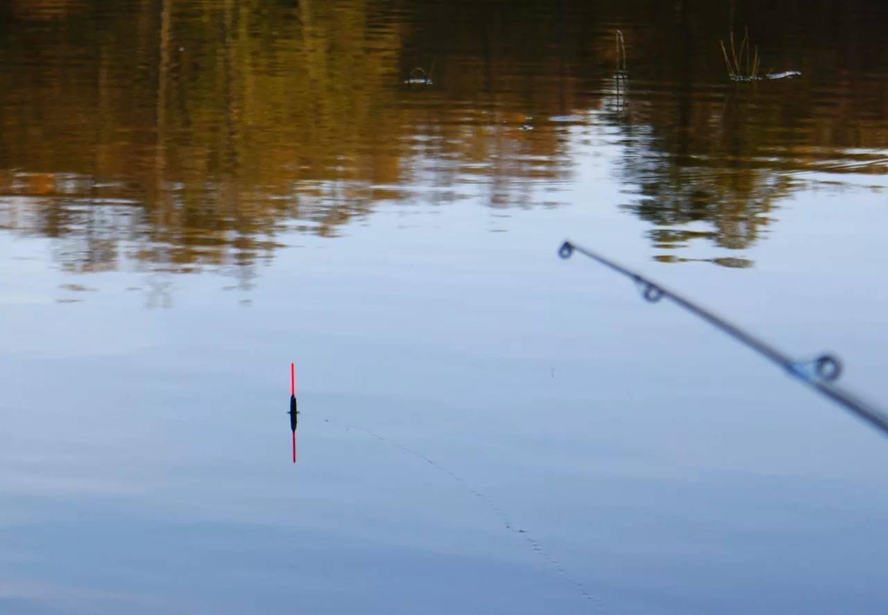 Осенняя ловля красноперки в сентябре, октябре и позже