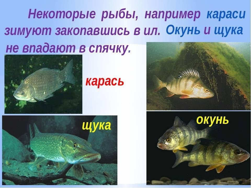 Как спят рыбы в аквариуме: фото и видео как спят рыбы в аквариуме: фото и видео