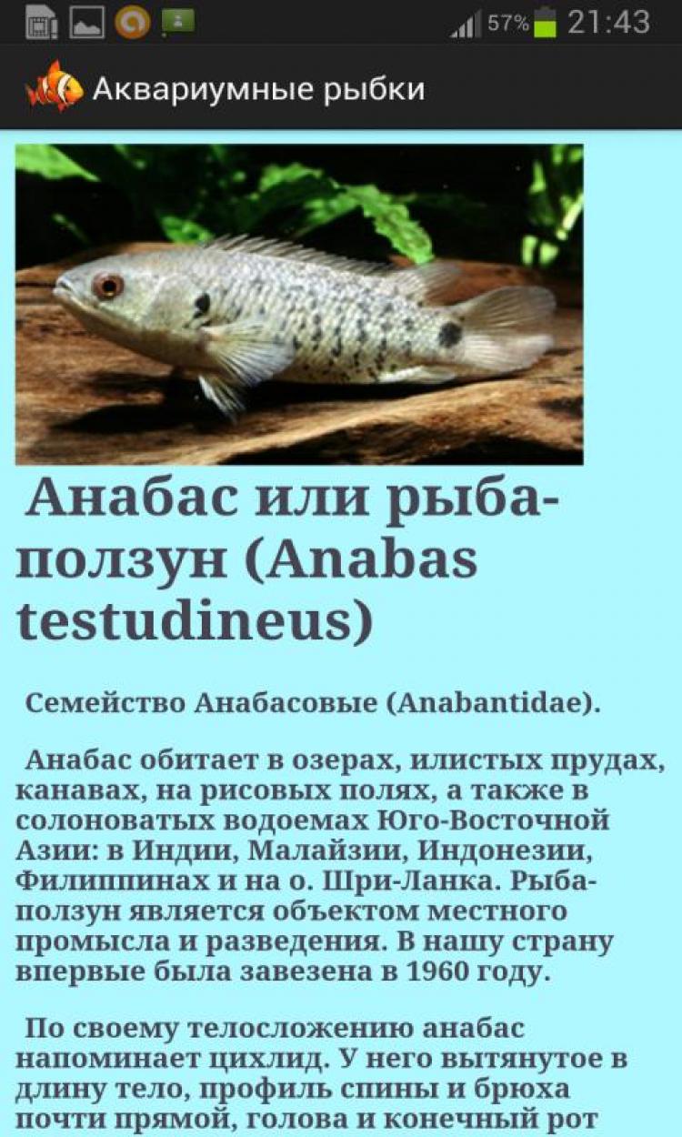 Анабас, или ползун: рыба с удивительными навыками