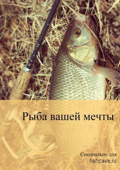 Ловля язя: весной, летом, осенью и зимой. на спиннинг и удочку. видео и фото