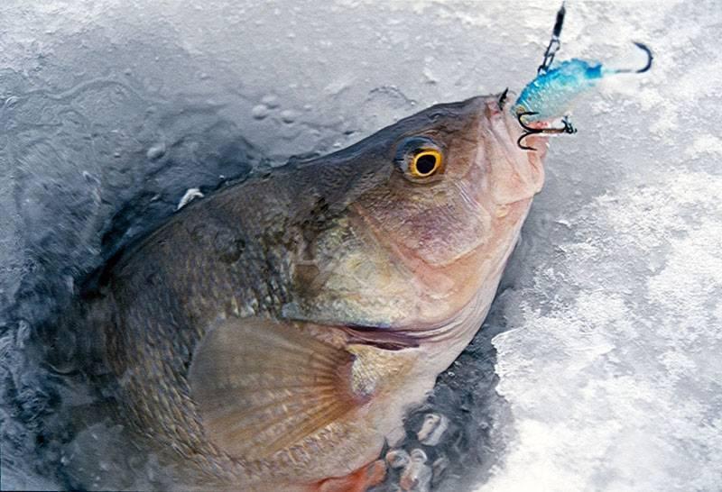 Зимняя плотва - нюансы и тонкости ловли - на рыбалке!