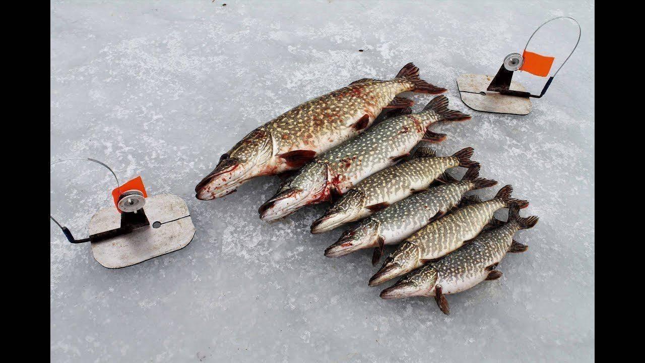Рыбалка с ночевкой: видео, особенности ловли зимой