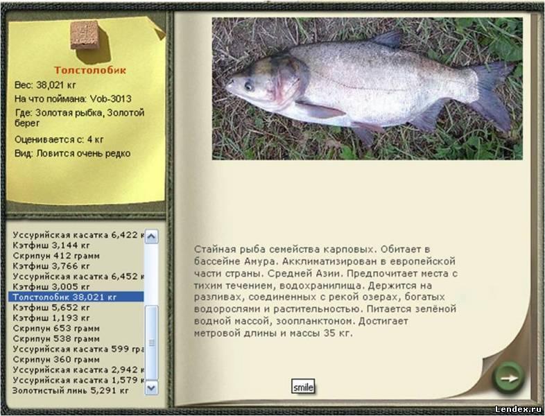 Ловля толстолобика: места, сезонные особенности и приманки
