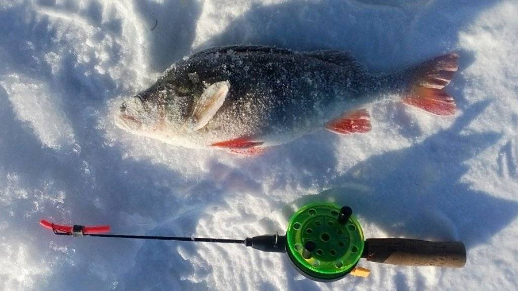 Ловля со льда: о поиске зимней рыбы и её ужении