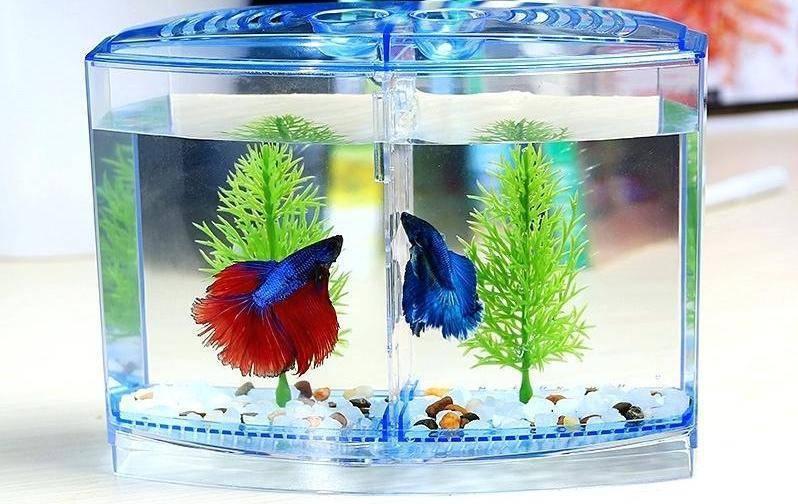 Маленький настольный аквариум с usb питанием, подсветкой, помпой, органайзером и часами