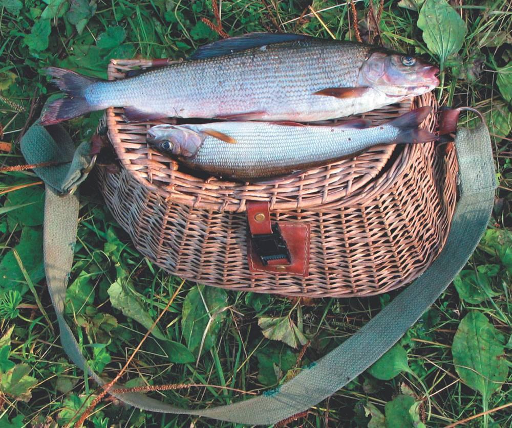 Обитатели белого моря: перечень, фото с описанием