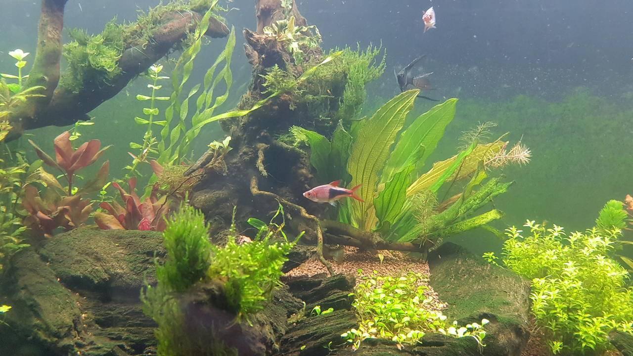 Почему мутнеет вода в аквариуме: основные причины появления на второй день после замены и подмены, а также, как с этим бороться и что делать с неприятным запахом