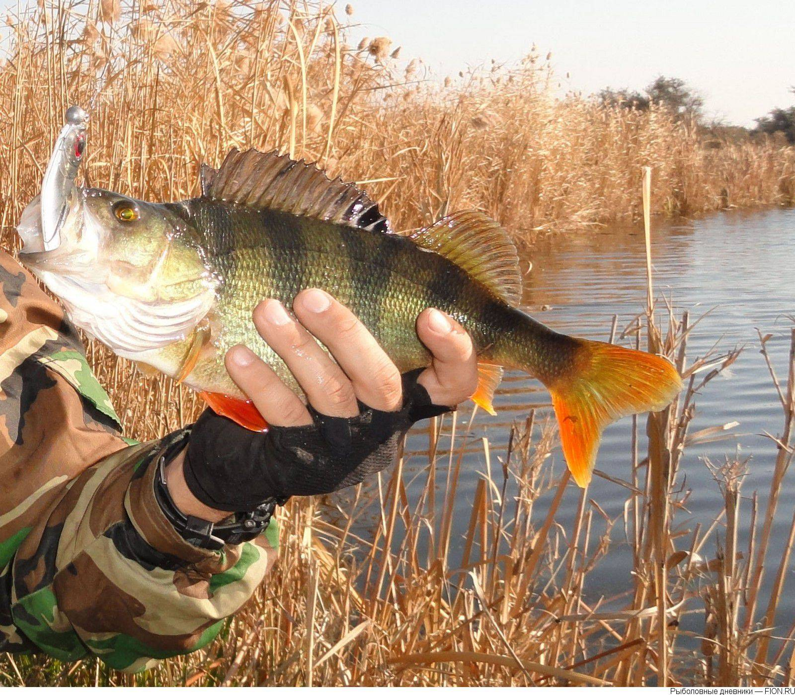 Особенности ловли карася осенью – рыбалке.нет