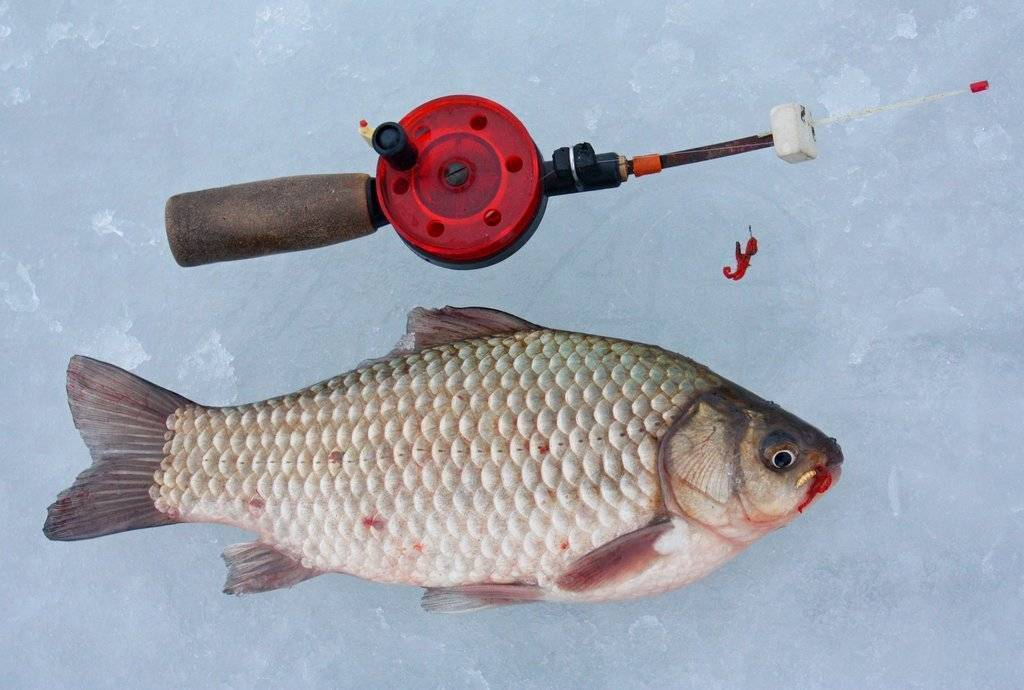 Ловля карася зимой на мормышку | зимняя рыбалка