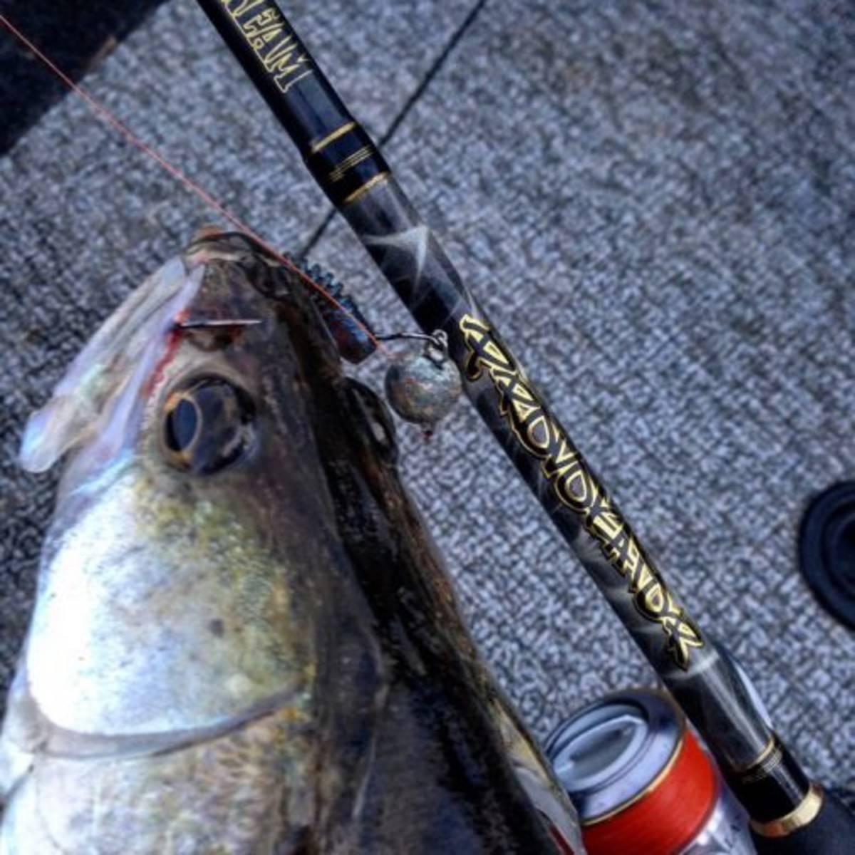 Северский донец река - всё о рыбалке на водоеме, для рыбаков города изюм.