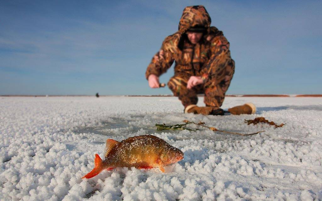 Рыбалка в минской области: уловистые места, реки, озера, водохранилища, платные пруды