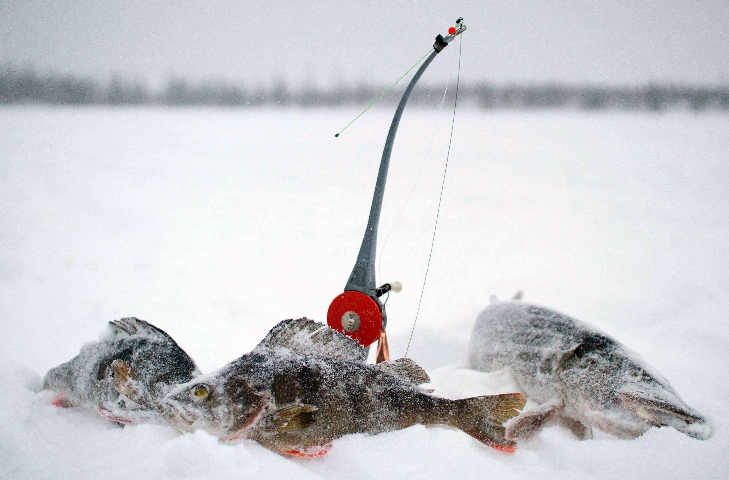 Рыбалка зимой