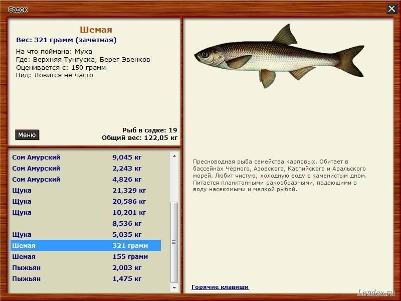 Таймень | фото, виды рыб, ареал обитания, образ жизни и способ ловли