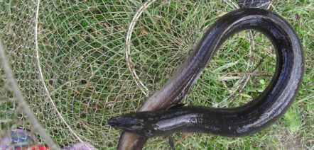 Как ловить на блесну спиннингом - щуку, окуня и жереха, какую блесну лучше выбрать?
