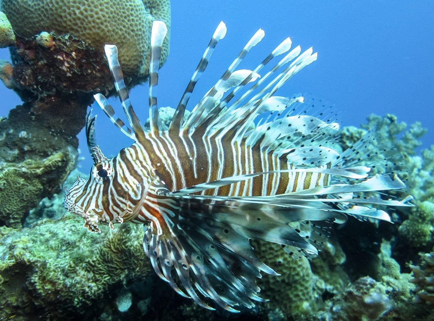 Рыбы красного моря: каталог названий
